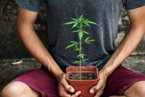 How to Grow Cannabis: A Beginners Guide to Growing Weed in 2020