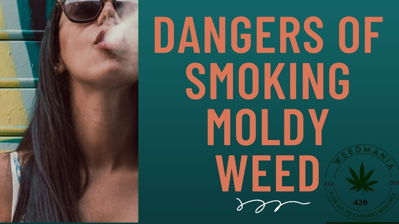 Dangers of Smoking Moldy Weed