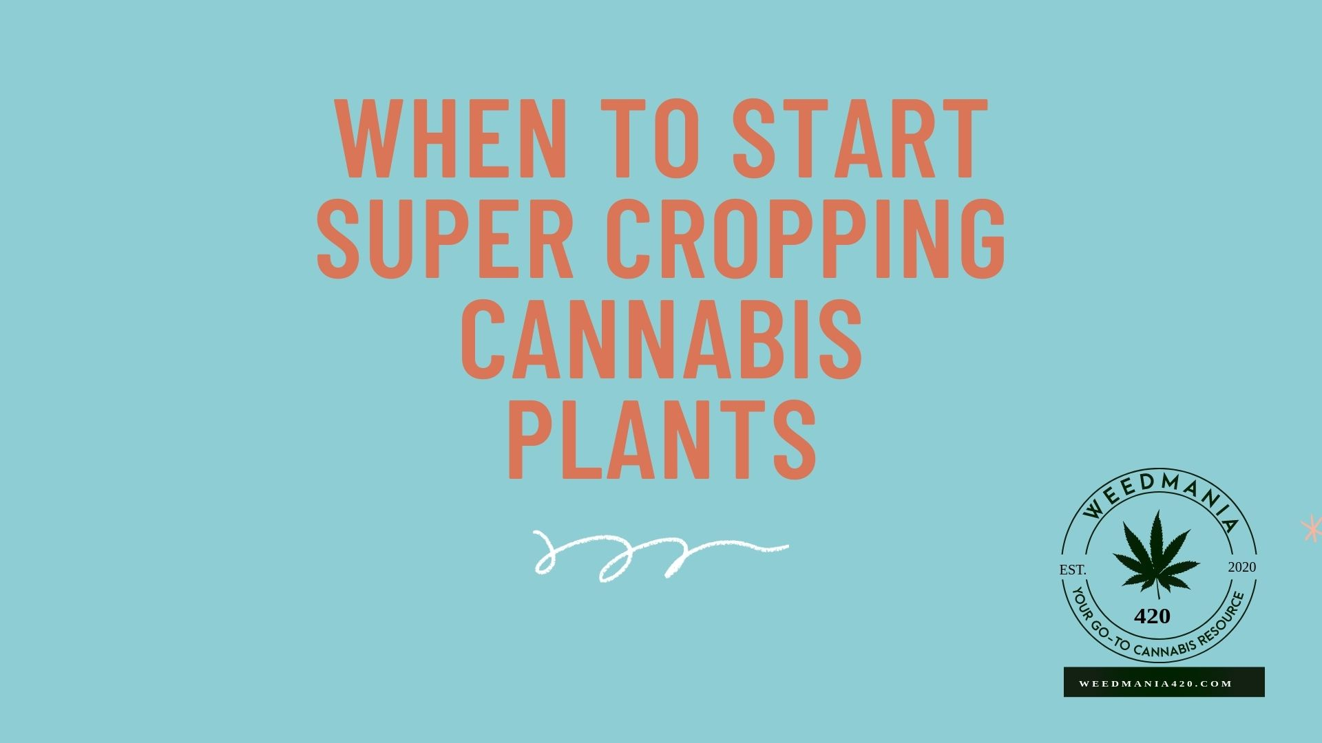When to Start Super Cropping Cannabis Plants