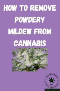 How to Remove Powdery Mildew from Cannabis