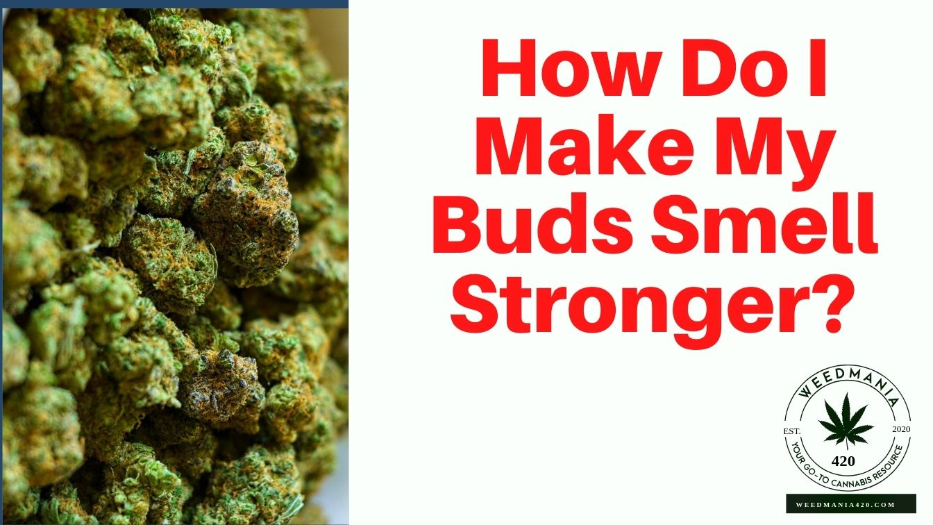 How Do I Make My Buds Smell Stronger?