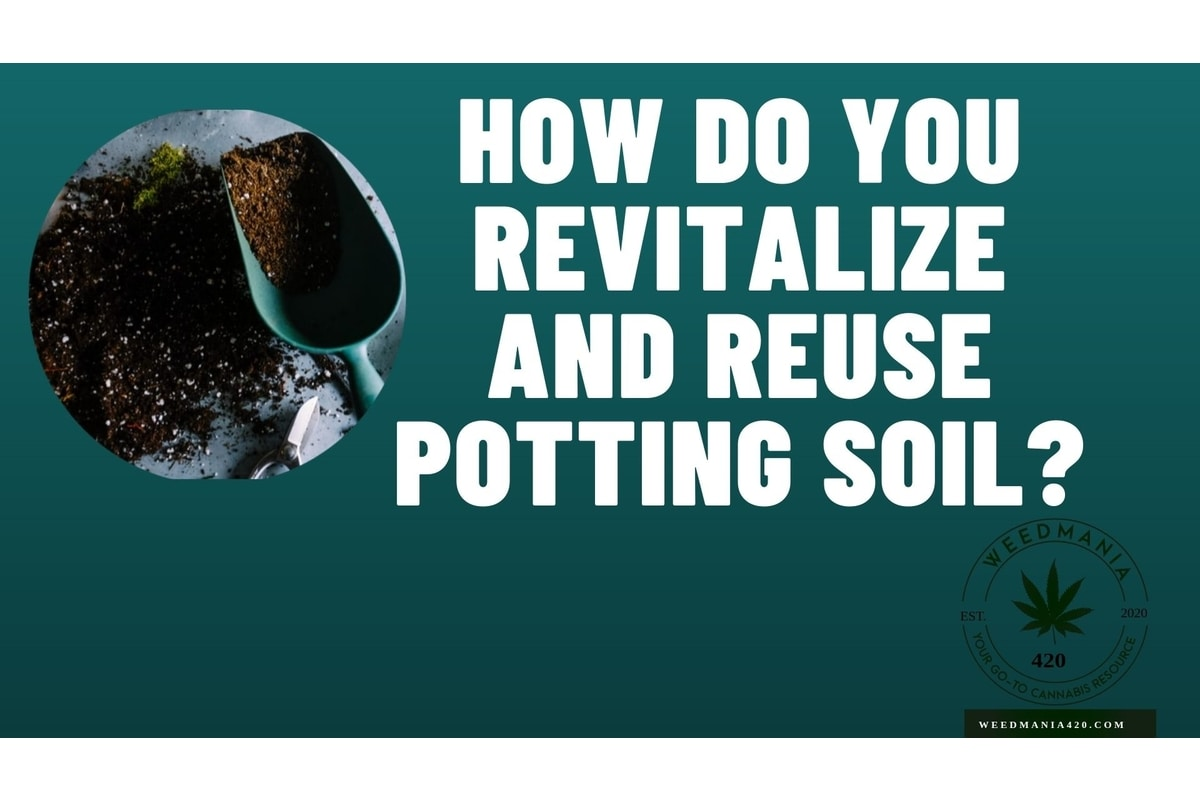 How Do You Revitalize and Reuse Potting Soil?