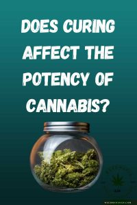 Does Curing Affect the Potency of Cannabis?